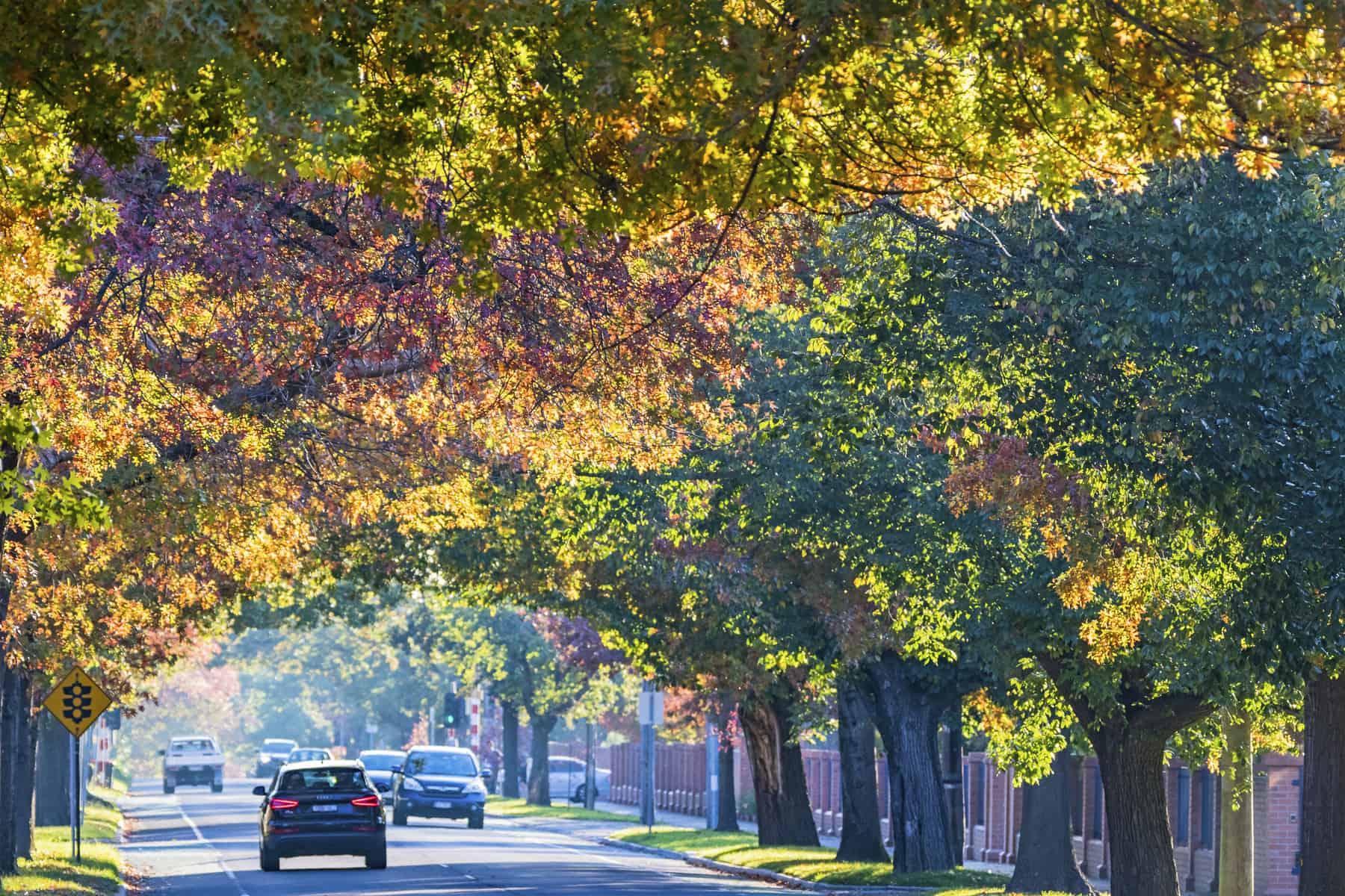 Australia's beautiful leafy suburbs in autumn
